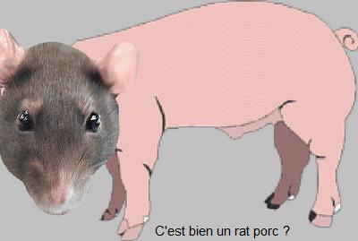 Rat-Porc