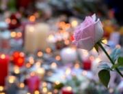 une-rose-deposee-en-hommage-aux-victimes-des-attentats-de-paris-devant-le-bataclan-le-15-novembre-2015_5465178