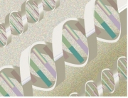 GENOTYPE 2